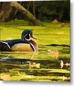 Wood Duck On Pond    Metal Print