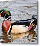 Wood Duck Profile Metal Print