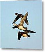 Wood Duck Trio Flight Metal Print