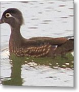 Wood Duck Visits The Pond Metal Print by Diane Mitchell