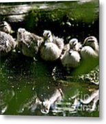 Wood Ducklings On A Log Metal Print