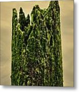 Wood In The Bay Metal Print