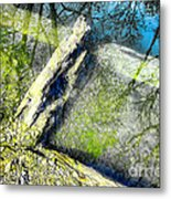 Wood Reflections Metal Print