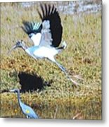 Wood Stork And Blue Heron Metal Print