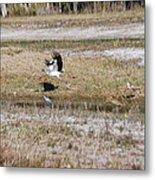 Wood Stork And Herons Metal Print