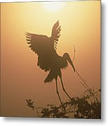 Wood Stork Collecting Nesting Material Metal Print