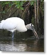 Wood Stork In The Swamp Metal Print