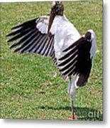 Wood Stork Metal Print