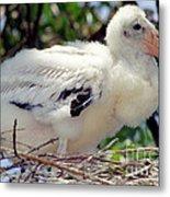 Wood Stork Nestling Metal Print