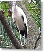 Wood Stork On A Limp Metal Print