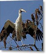 Wood Stork Preparing To Fly Metal Print