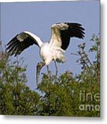 Wood Storks Metal Print