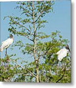 Wood Storks In The Everglades Metal Print