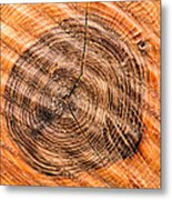 Wood Surface With Annual Rings Metal Print