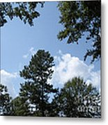 Wooded Forest  Metal Print
