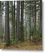 Wooded Panorama In Our Northeast Metal Print