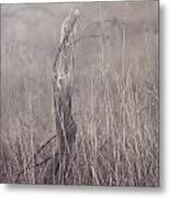 Wooden Fence Post On A Foggy Winter Day Metal Print