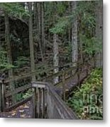 Wooden Forest Trail  Metal Print