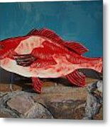 Wooden Red Snapper Metal Print