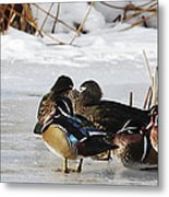 Woodies On Ice Metal Print