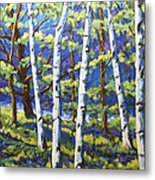 Woodland Birches Metal Print