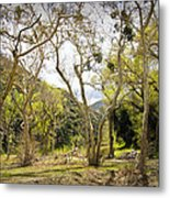 Woodland Glen In The California Vallecito Mountains Metal Print