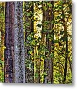 Woodland Morning Metal Print