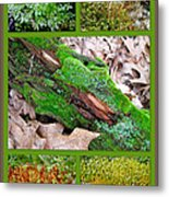 Woodland Mosses Metal Print