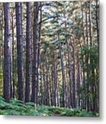 Woodland Path Metal Print by David Isaacson