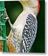 Woodpecker 106 Metal Print