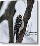Woodpecker In Winter Metal Print