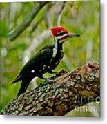 Woodpecker On A Limb Metal Print