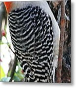 Woodpecker Profile Ll Metal Print