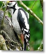 Woodpecker Swallowing A Cherry  Metal Print