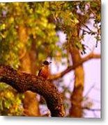 Woodpeckers Of Fort Simcoe Metal Print