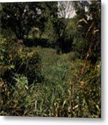 Woods Near My Home Metal Print by Scott Kingery