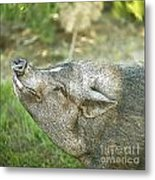 Woody Smiles Metal Print by Artist and Photographer Laura Wrede