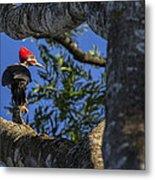 Woody Woodpecker Metal Print