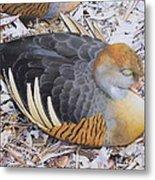 Woody's Duck Metal Print