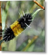 Woolly Worm In Yellowstone National Park Metal Print
