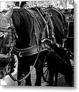 Working Horse Metal Print