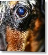 Worried Wiener Metal Print