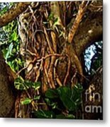 Wrapped In Vines Metal Print by Claudette Bujold-Poirier