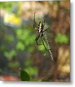 Writing Spider Metal Print by Nelson Watkins