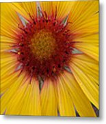 Wyoming Sunflower Metal Print