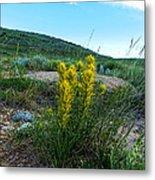 Wyoming Wildflowers Indian Paintflowers Metal Print