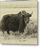 Yaks...the Official Animal Of Tibet Metal Print