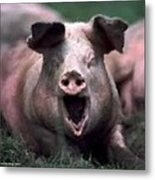 Yawn No I Am Not Ready For Bacon Yet Metal Print