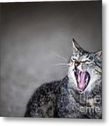 Yawning Cat Metal Print by Elena Elisseeva