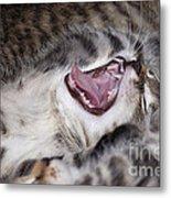 Yawning Kitten Metal Print